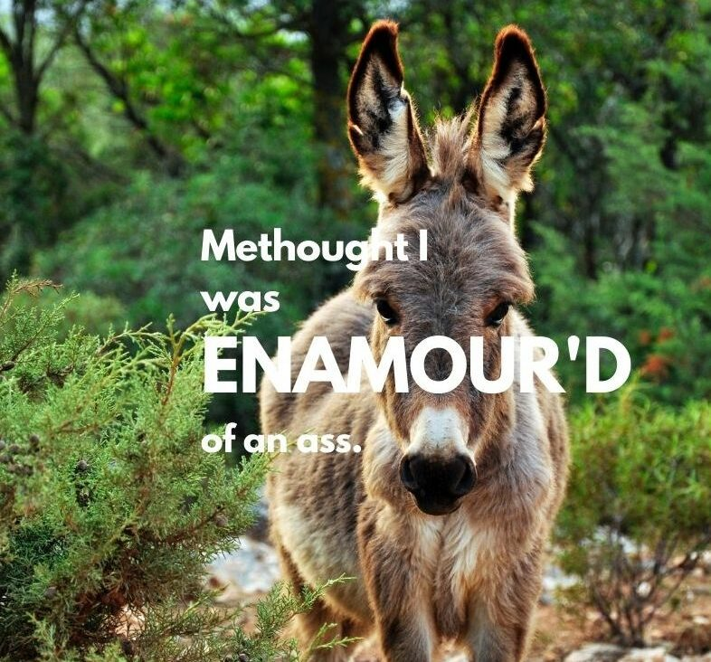"""Picture of a donkey with Shakespare's """"Methought I was enamoured of an ass"""" quote from Midsummer Night's Dream"""